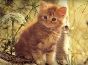 Очень красивые Котята в дар возраст 1.5 месяца