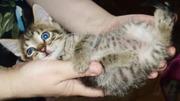 Котята в дар - умные,  аккуратные