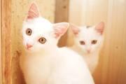 Ангельские котята в дар:)