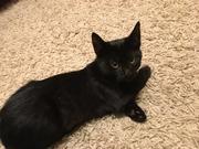 Замечательный котенок. Тепло и радость в Ваш дом.